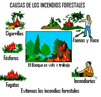 Resultado de imagen para incendios forestales dibujos