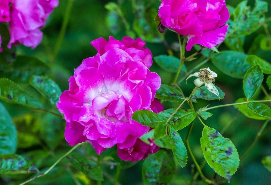 Everything s coming up roses