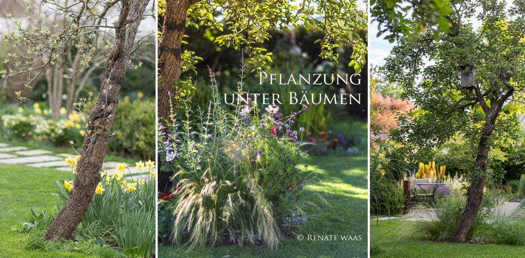 Gartenblog geniesser garten pflanzen unter baeumen for Pflanzen im garten