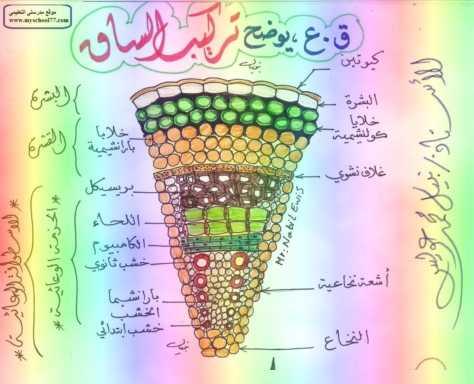 مذكرة رسومات الأحياء تانيه ثانوي ترم أول 2019 - موقع مدرستى