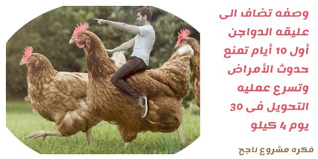 خلطات لتسمين الدواجن ( وصفات لزياده وزن الدجاج فى 30 يوم 4 كيلو )