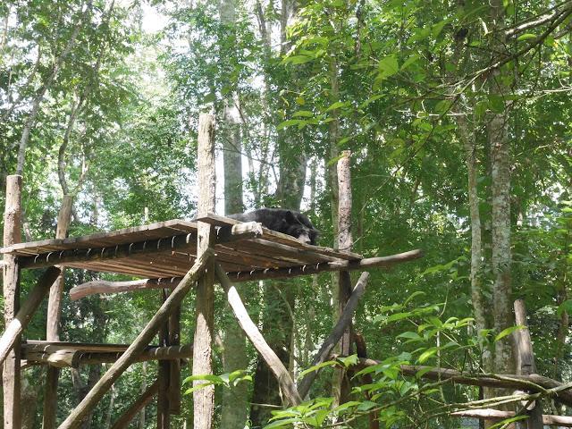 kuang si waterfall bear rescue, luang prabang, laos