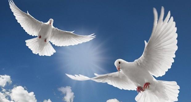 izreke i citati o miru