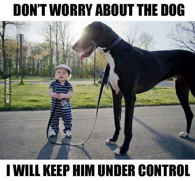 Don't Worry About the Dog, I Will Keep Him Under Control, Great Dane Baby Funny Dog Memes and Link-Up via Devastate Boredom