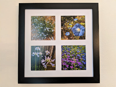 Blue and Purple Flowers Tetraptych by Citysqwirl