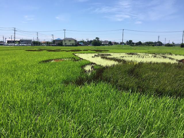 こしがや田んぼアート2015食戟のソーマ(7/19)