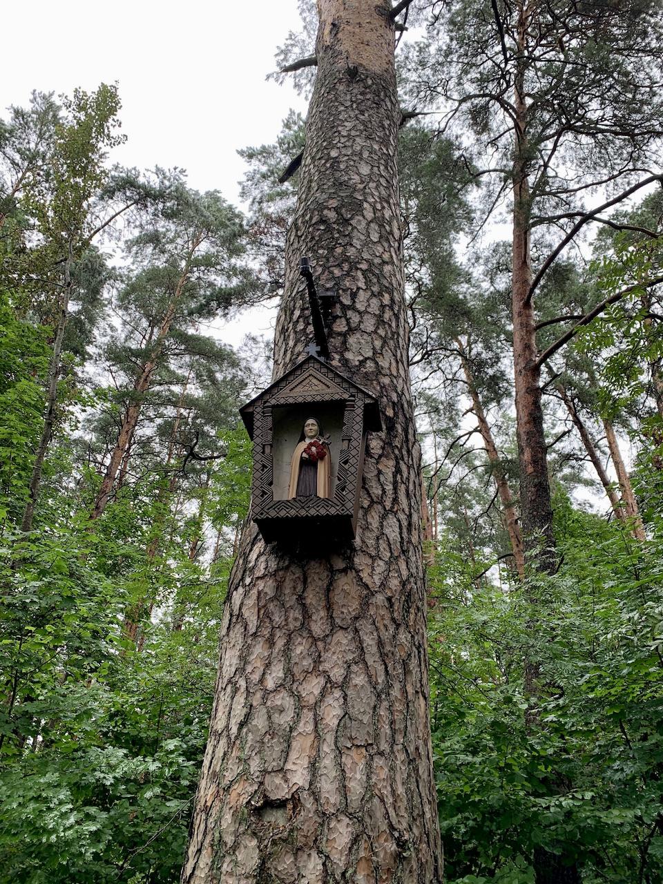 Koplytėlė medyje Camino