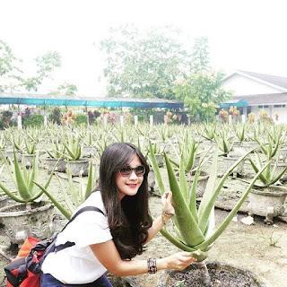 Aloe Vera Centre