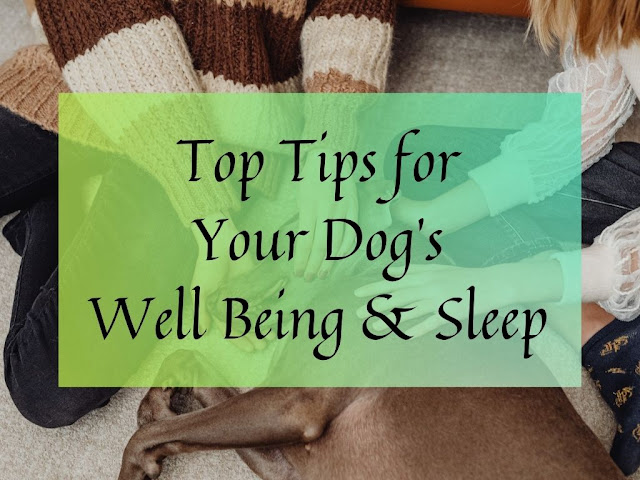 Top Tips for Your Dog's Well Being & Sleep