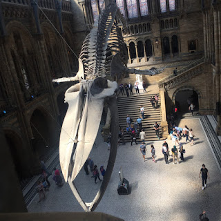 Prehistoric skelaton suspended above museum visitors