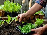 Inilah 7 Solusi Berkebun yang Baik Terhadap Kesehatan Mental