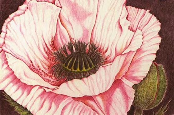 Tuto Dessin Comment Dessiner Une Fleur Avec Des Crayons De Couleurs