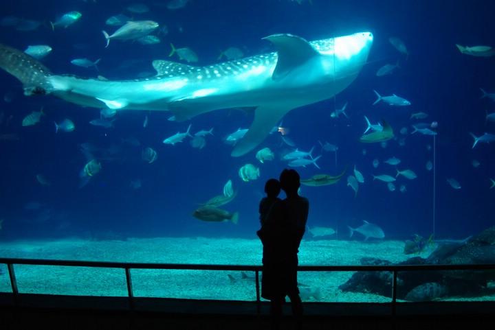 趴趴牛趴趴照: 夜宿海生館‧海洋生物博物館印象