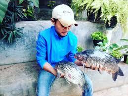 Kumpulan Racikan Umpan Ikan Mas Jitu Ampuh Dan Mudah Dibuat