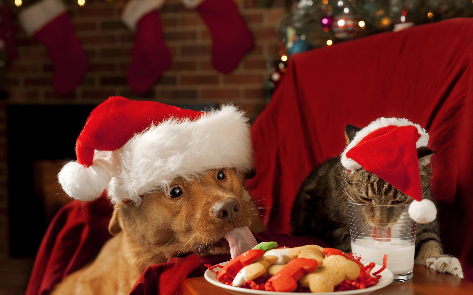 christmas wallpaper with a dog and a cat wearing christmas hats hd dog and cat wallpaper
