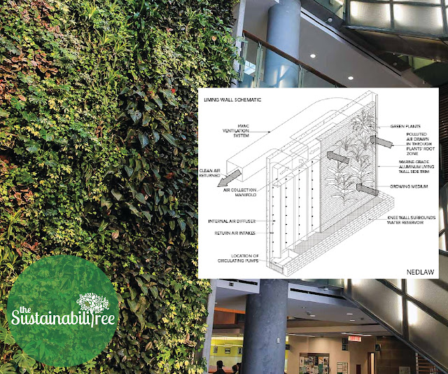 uOttawa's living wall with a super imposed image of Nedlaw's technology describing how it functions