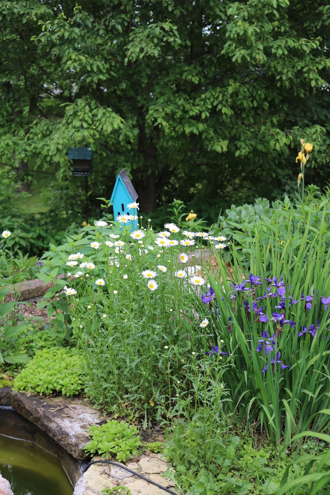 Amy S Creative Pursuits My Late Spring Garden 2019