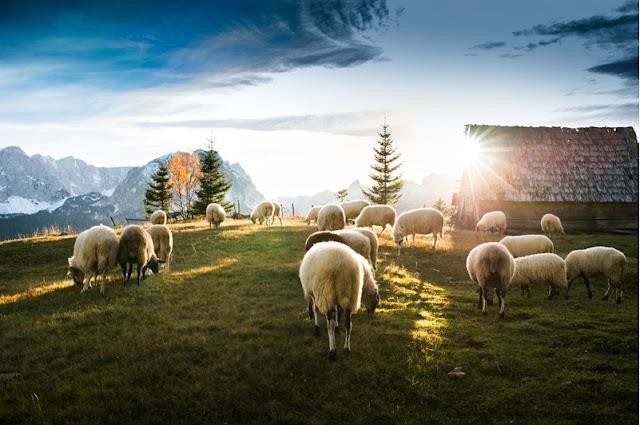 Ξεκίνησε η πληρωμή των δικαιούχων βιολογικής δράσης ζωικής παραγωγής στην Πελοπόννησο