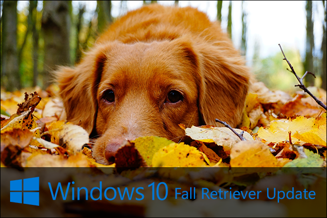 fall-retriever-windows-update