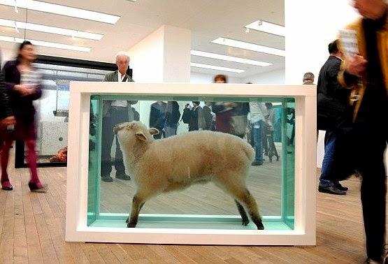 exposición de una oveja