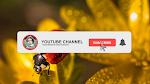 Membuat Tombol Subscribe Youtube dengan Foto dan Nama Channel di Kinemaster