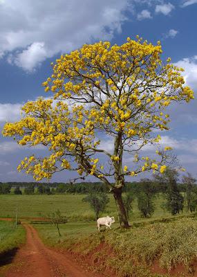 """Preludio para """"Campo"""" debajo  del Flor amarillo."""