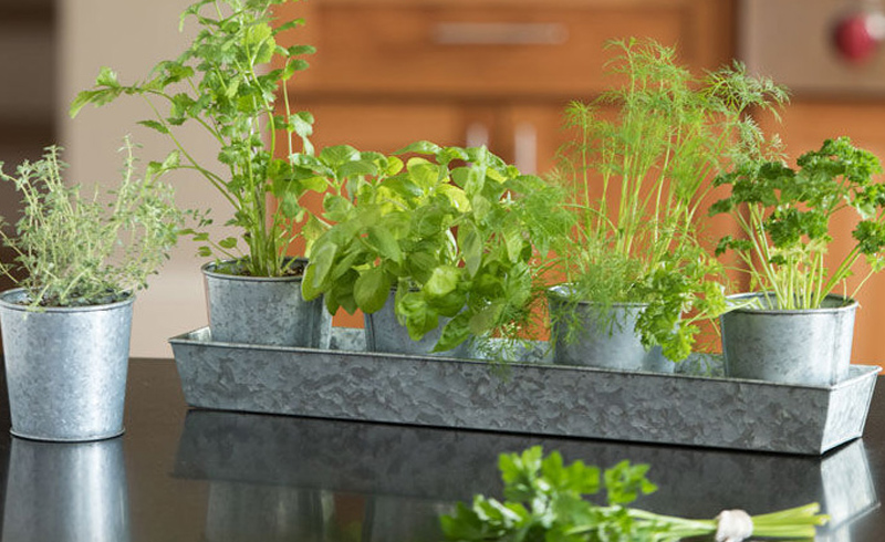 How to Grow Your Own Herbs Indoors