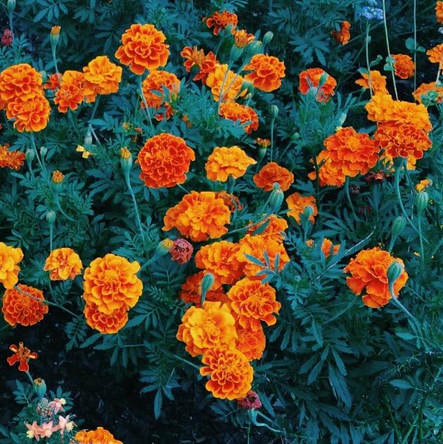 bok tower gardens, Lauren Banawa, orange flowers, fashion blog