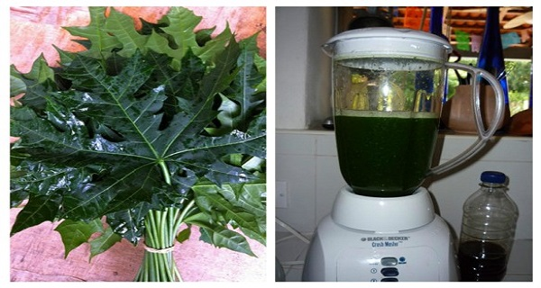 "This Plant Is Called ""God's Gift"" Because It Can Cure More Then 100 Diseases (Recipe)"