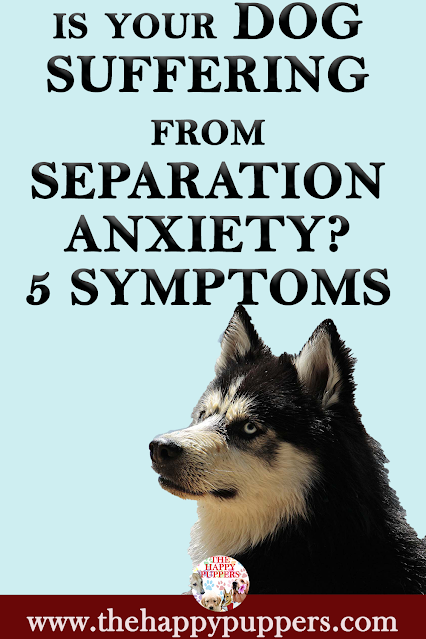 Is your dog suffering from separation anxiety?