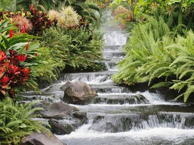nature- beauty