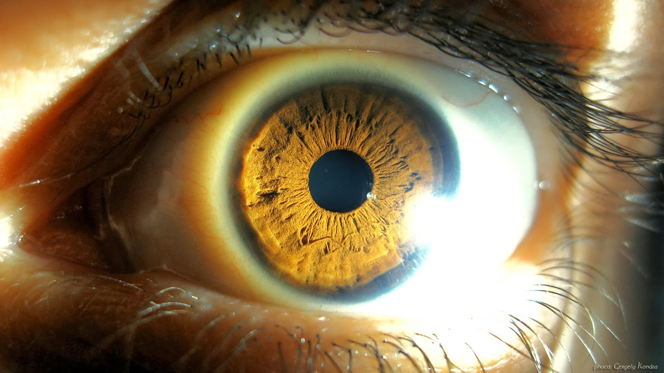 Eye Macro Wallpaper