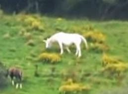 Bigfoot Evidence: Are You Trying to Tell Me Unicorns Are ...  Bigfoot Evidenc...