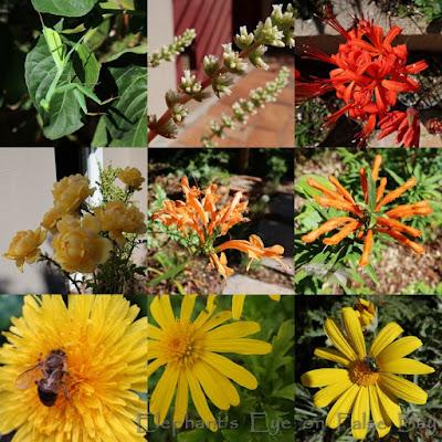 Warm April flowers