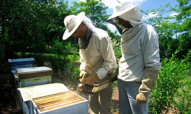 Biberon negli alveari per sfamare le api danneggiate dal clima impazzito