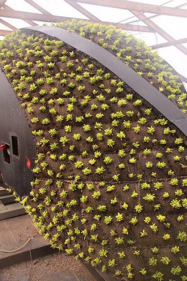 Sembrando plantas Mosaicultura, esculturas vegetales
