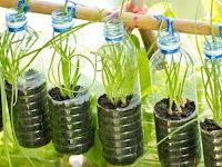 7 Cara Urban Farming yang Dapat Anda Terapkan di Pekarangan Rumah