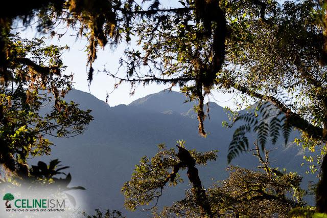 mt hibok-hibok mossy forest