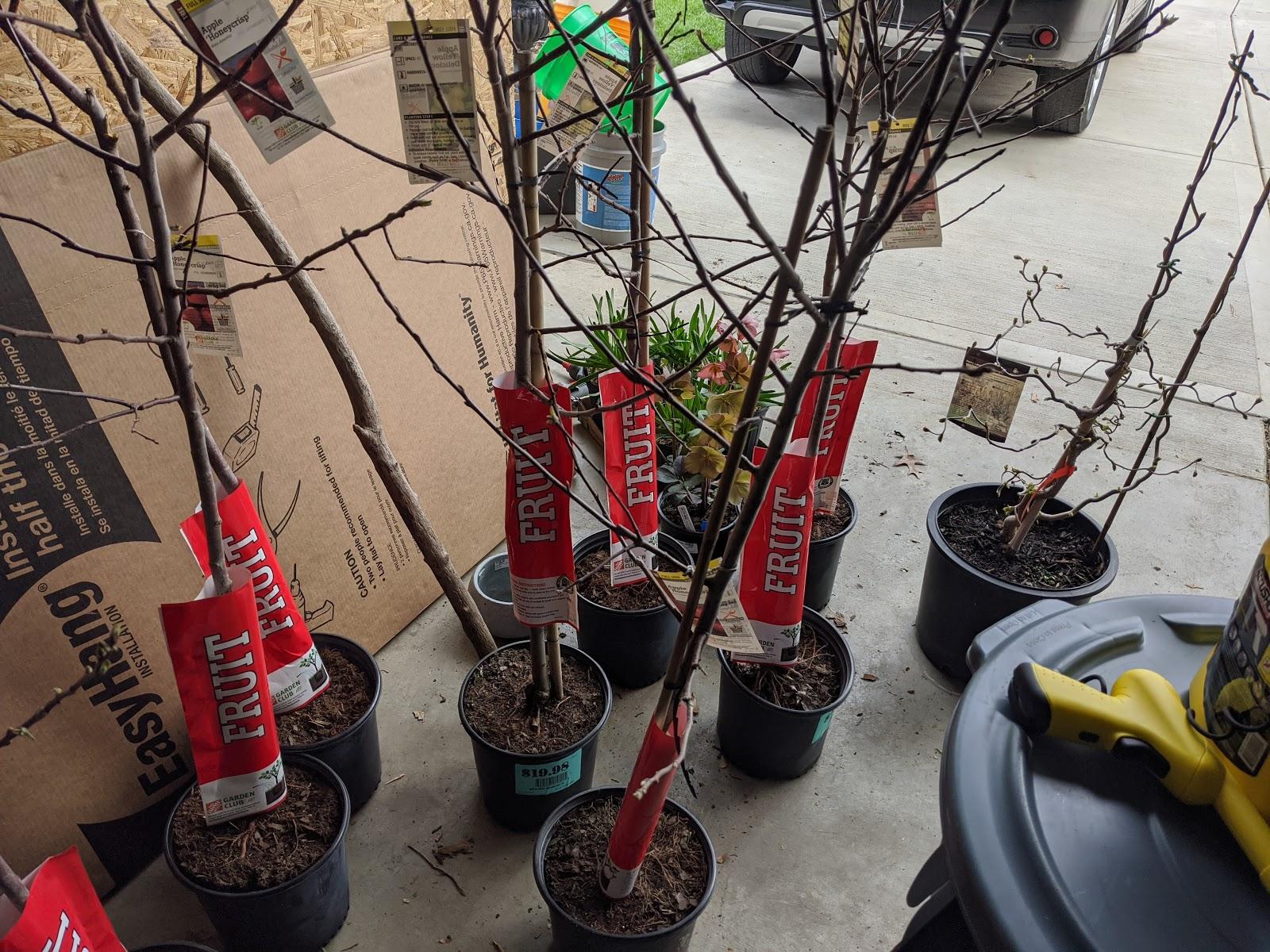 Apple Tree Belgian Fence Espalier In The Works April 2020