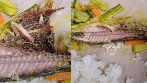Ikan Goreng di Nasi Bungkus Penuh Belatung, Baru Sadar Setelah Habis Setengahnya