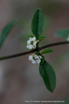 flora nativa de argentina