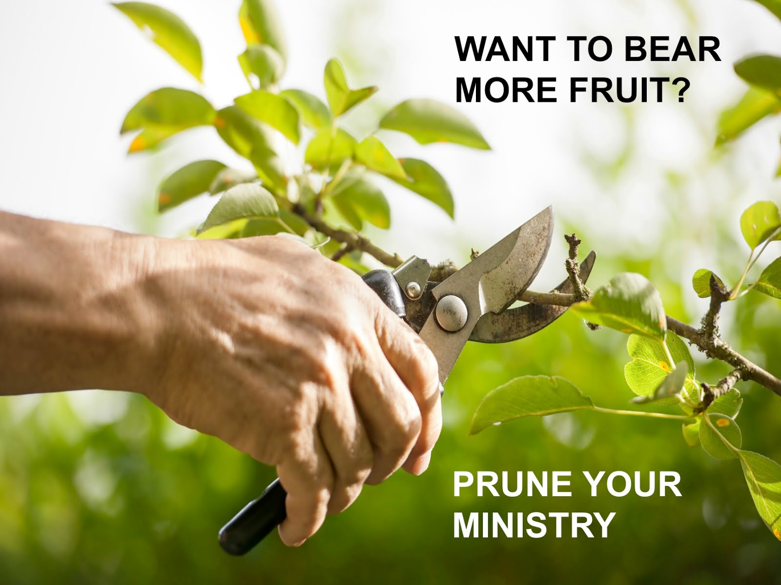 Do You Want To See Your Ministry Bear More Fruit It May
