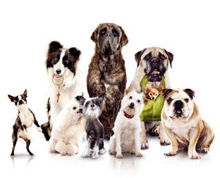 Самые знаменитые собаки в жизни и в искусстве