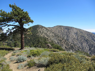 View east toward Mt. Burnham and Mt. Baden-Powell