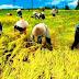 """Wakil Bupati Karawang Dialog Bersama Petani yang """"Terancam 2000 Hektar"""" Gagal Tanam"""