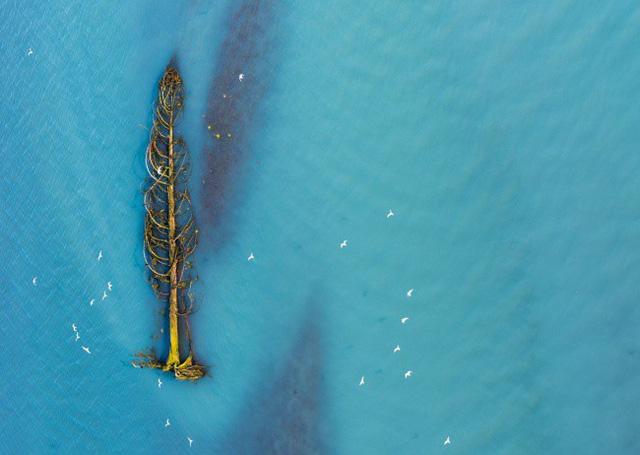 Một cây tuyết tùng bị nước cuốn xuống hạ lưu tại British Columbia, Canada. AmyPrint