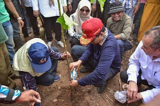 Gubernur NTB Tanam Kemiri dan Kayu Putih di Parado