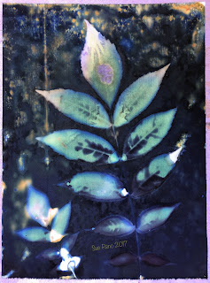 Wet Cyanotype_Sue Reno_Image 129