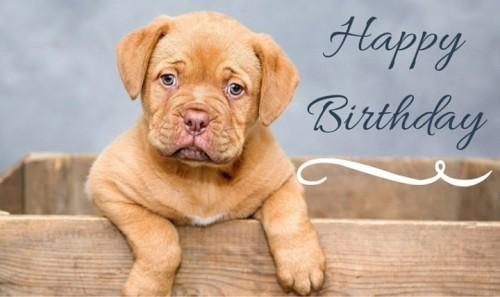 birthday-msg-for-best-friend