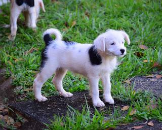 puppy in Puriscal, Costa Rica